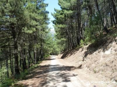 Pinares de Piedralaves; club de montaña bastones de trekking escapadas desde madrid